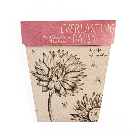 everlasting daisy seeds